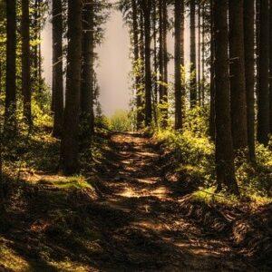 Trail Run Everyday